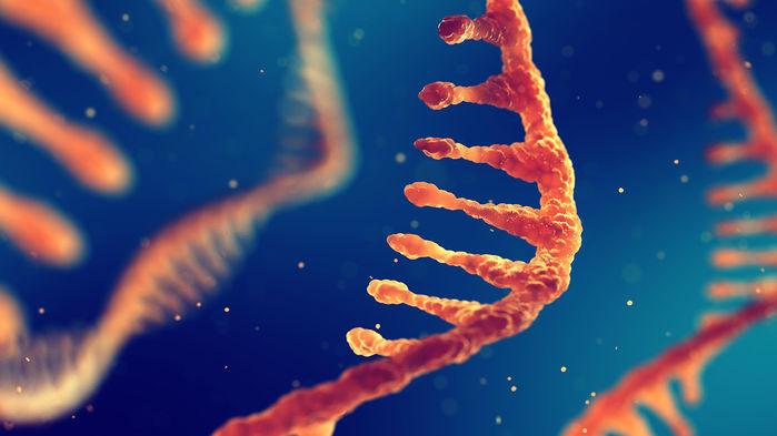 El poderoso primo CRISPR accidentalmente mutó el ARN al editar el objetivo de ADN