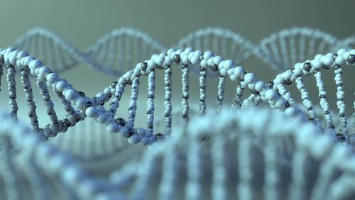80/5000 Los datos preclínicos tienen la terapia génica AVR-RD-02 en camino al primer ensayo en humanos