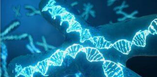 Sulfato de heparán células renales