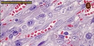 Respuesta inmunológica a los virus, Instituto de Hematopatología, Dr Joaquín Carrillo Fraga