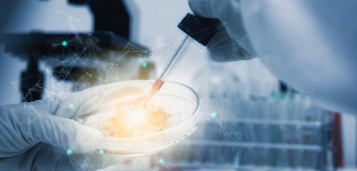 modelo ratón de Pompe, terapia genética