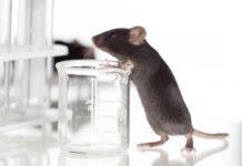 Posible terapia de edición del genoma se muestra prometedora en un modelo de ratón Fabry